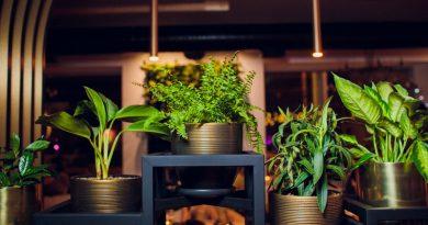 fleurir entreprise 5 conseils interflora solution pro activ assistante